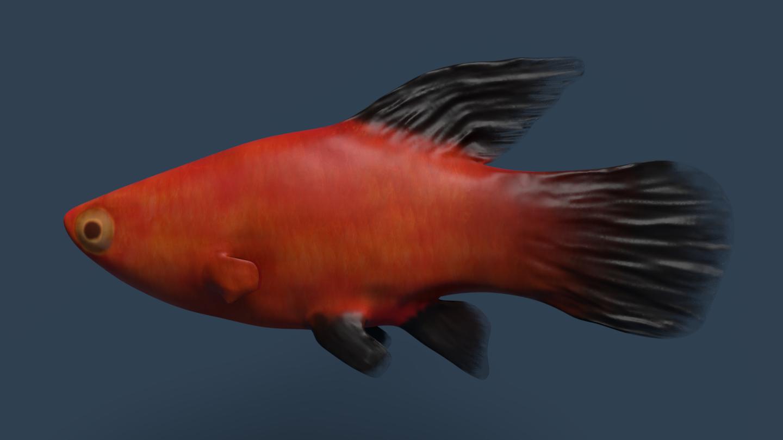 Freshwater aquarium, part 3
