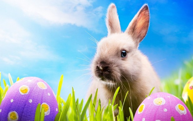 cute easter bunny wallpaper 2021