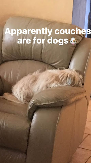 Couches are for Dogs