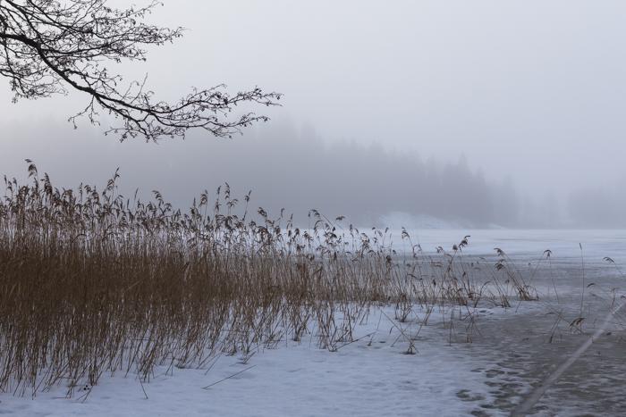 sumuinen talviaamu maaliskuu