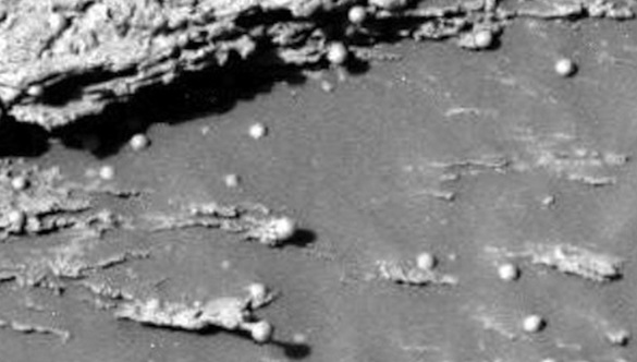 Gambar 14: Spesi,en Mars menyerupai buah dengan benang mirip miselium.