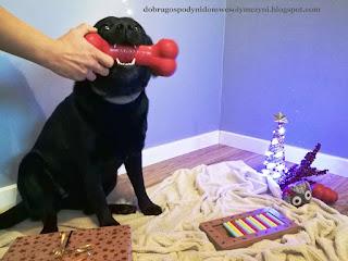 kong dla psa, kość dla psa, zabawka dla psa, zęby, prezenty dla psa