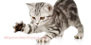 Cara Mengobati Cakaran Kucing Agar tidak Infeksi