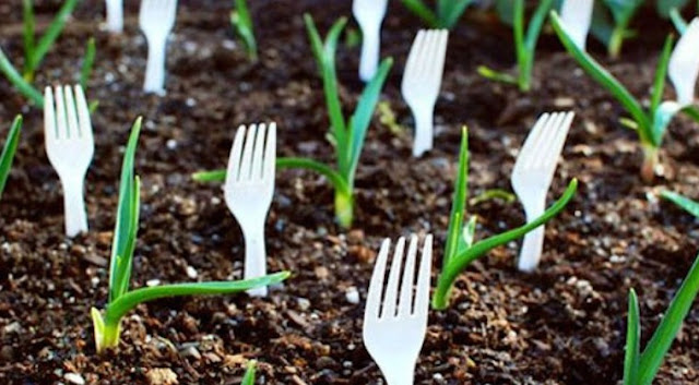 She Sticks Forks in Her Garden for a Truly Genius Reason!