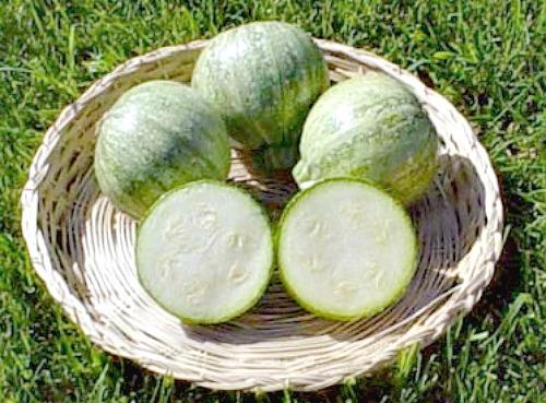 round summer zucchini