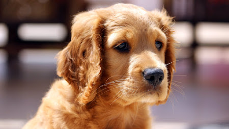 Adorable Puppy Public Domain