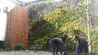 Harga pembuatan vertical garden paling murah
