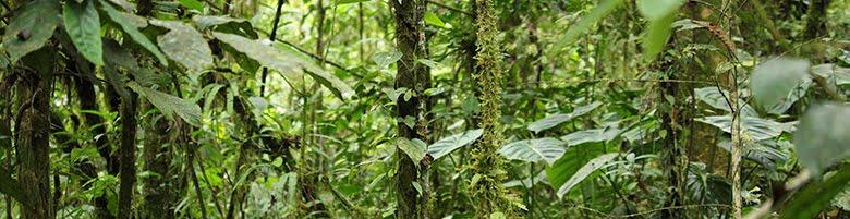 Selva Archidona, Ecuador