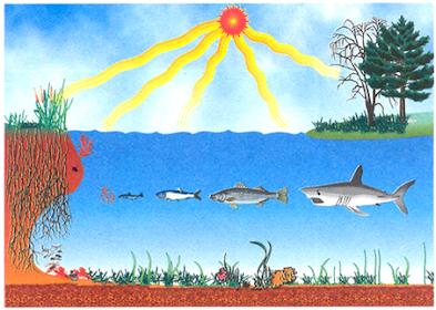 Unsur Unsur Lingkungan Biotik dan Abiotik Serta Arti Pentingnya bagi Kehidupan