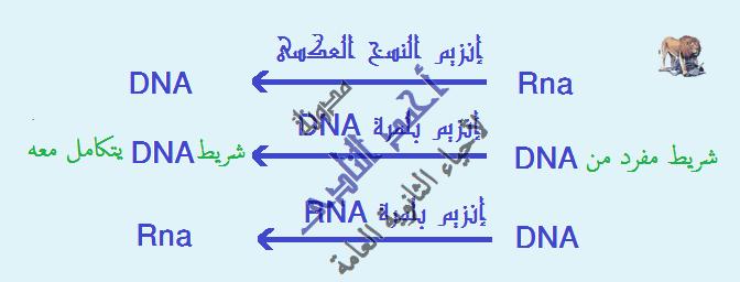 إستنساخ تتابعات dna -  عملية الإستنساخ – الحصول على قطع dna – إنزيمات القطع – القصر البكتيرية – إنزيم النسخ العكسى- أجزاء بها شفرة - إنزيم بلمرة dna -  أحياء الثالث الثانوى