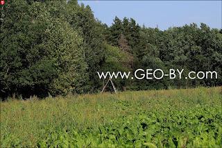 Лес у деревни Савичи. Охотничья вышка