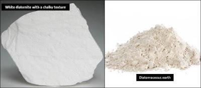 Diatom pembentuk batu diatomit