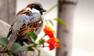 nice-sparrow-looking-surprisingly-images