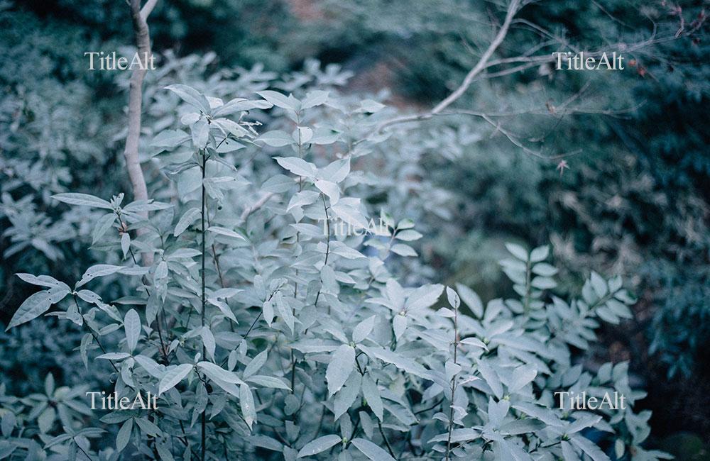 明治神宮の参道横の木の写真