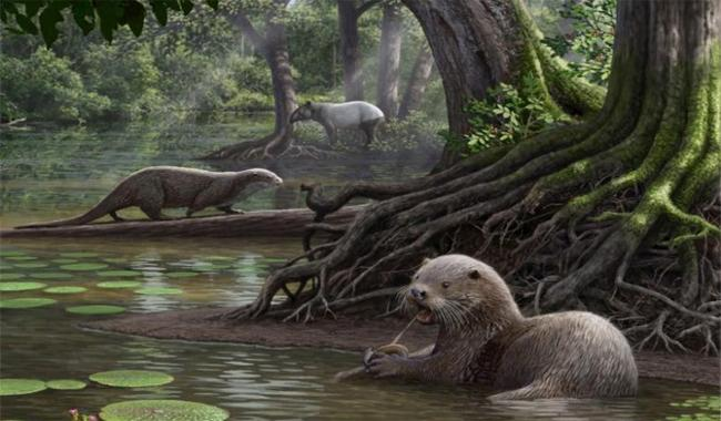 Scientists have unearthed Fossils of utterly huge otter unearthed in China