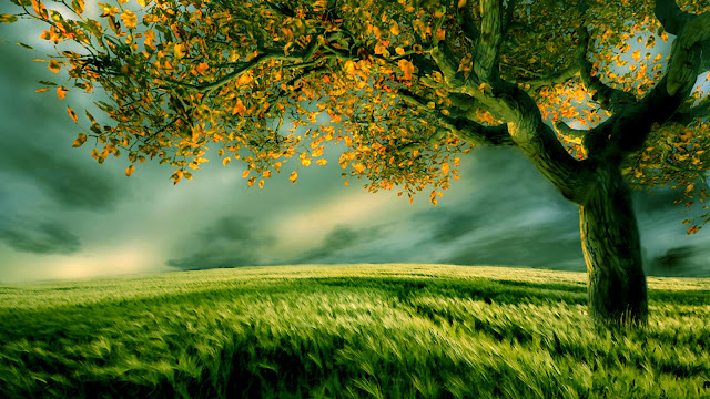 Tree Wallpaper Dekstop Tree Wallpaper Dekstop tree desktop wallpaper
