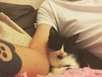 cat, black and white, arm, tattoo, sofa, cushion, home