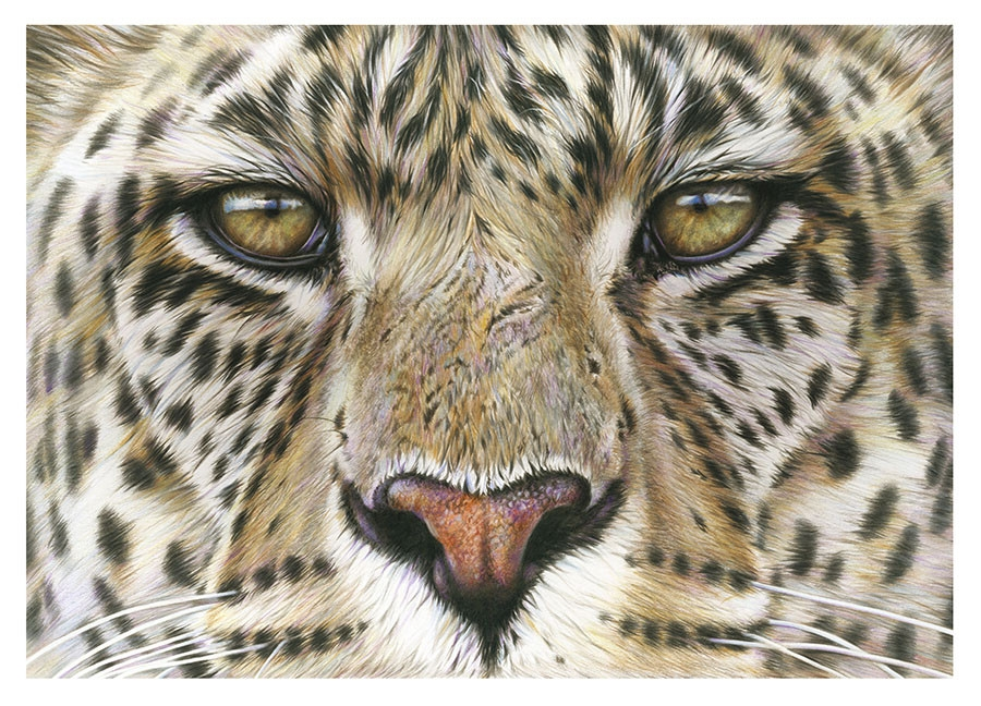 12-Leopard-Eyes-Richard-Symonds-Wildlife-Fine-Art-Drawings-a-Painting-and-a-Video-www-designstack-co