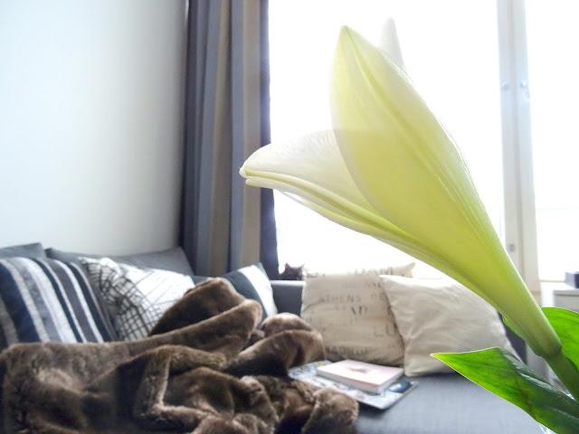 Lilja ja sohva