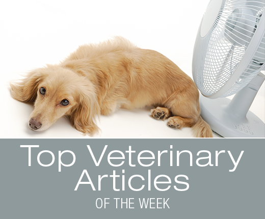 Top Veterinary Articles of the Week: Heatstroke, Bufo Toads, and more ...