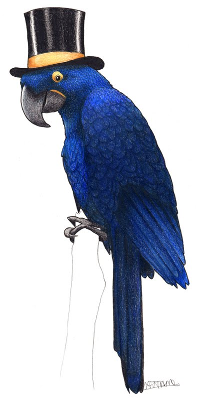 Birds In Hats Norwegian Blue Parrot Hyacinth Macaw In A Top Hat