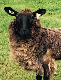 mitten state sheep wool shepherdess notes wool break. Black Bedroom Furniture Sets. Home Design Ideas