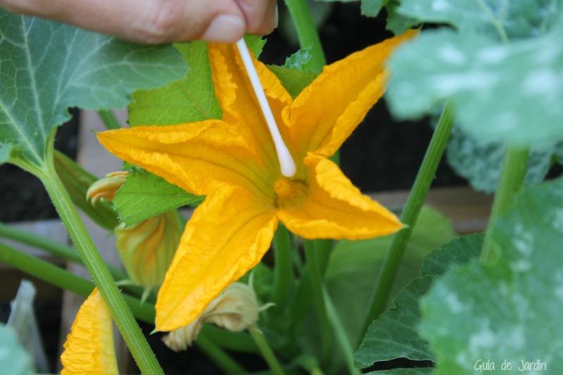 Extrayendo el polen