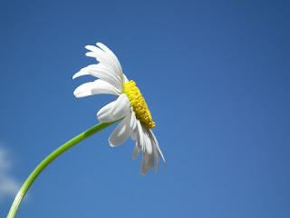 Es tan solo una flor pero es la inmensidad de la creación de Jehová.