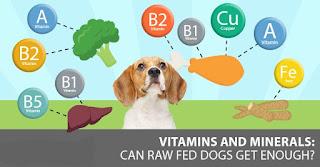 Vitaminas para perros y otros suplementos nutricionales para su perro