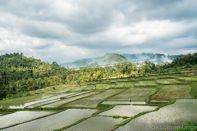 Pupuan - Bali