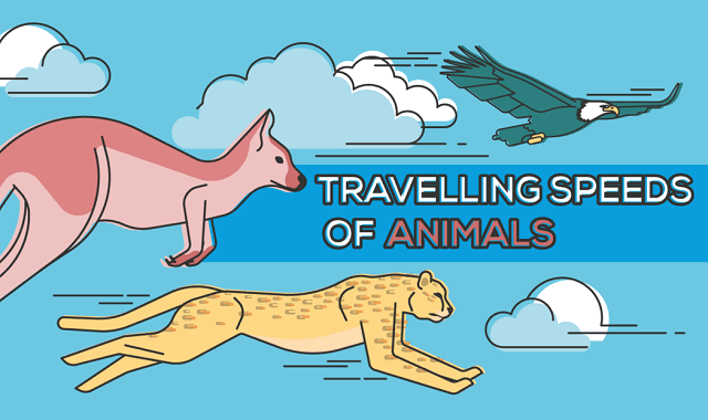 Travelling Speeds of Animals