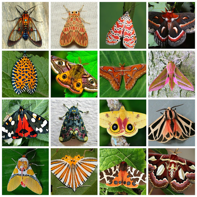 photos of moths