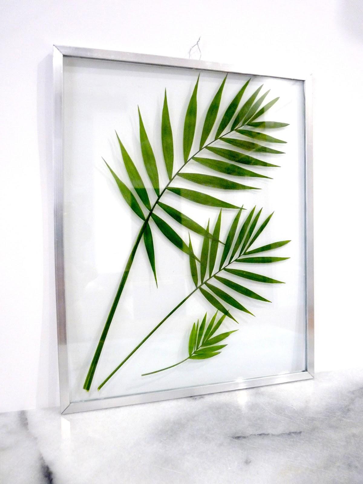 Rue rivoirette diy mon herbier entre deux verres for Plante sous verre
