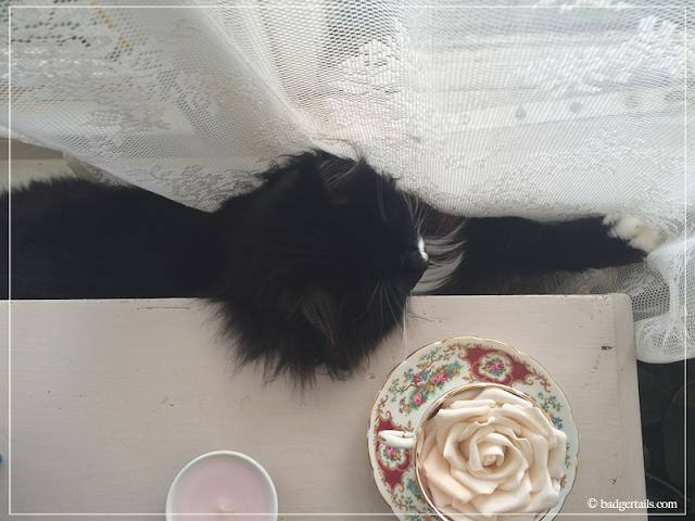 Black-Long-Haired-Cat-Laying-on-Radiator-in-Window