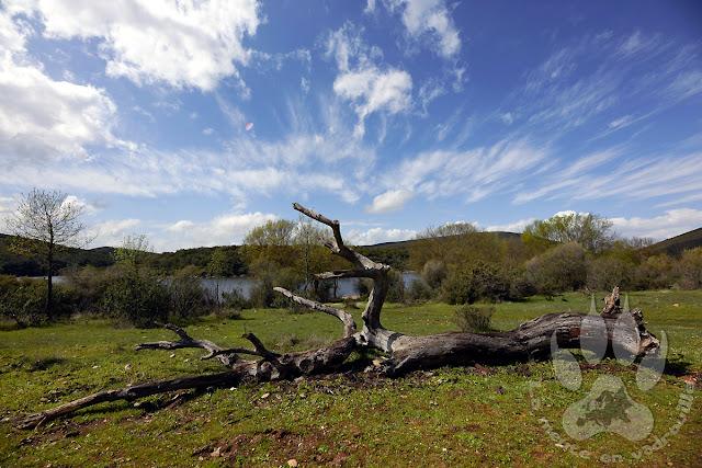 Espagne-Monfrague-Arroyo-cansinas