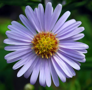 "6-Down ASTER = ""STAR"" in Latin"