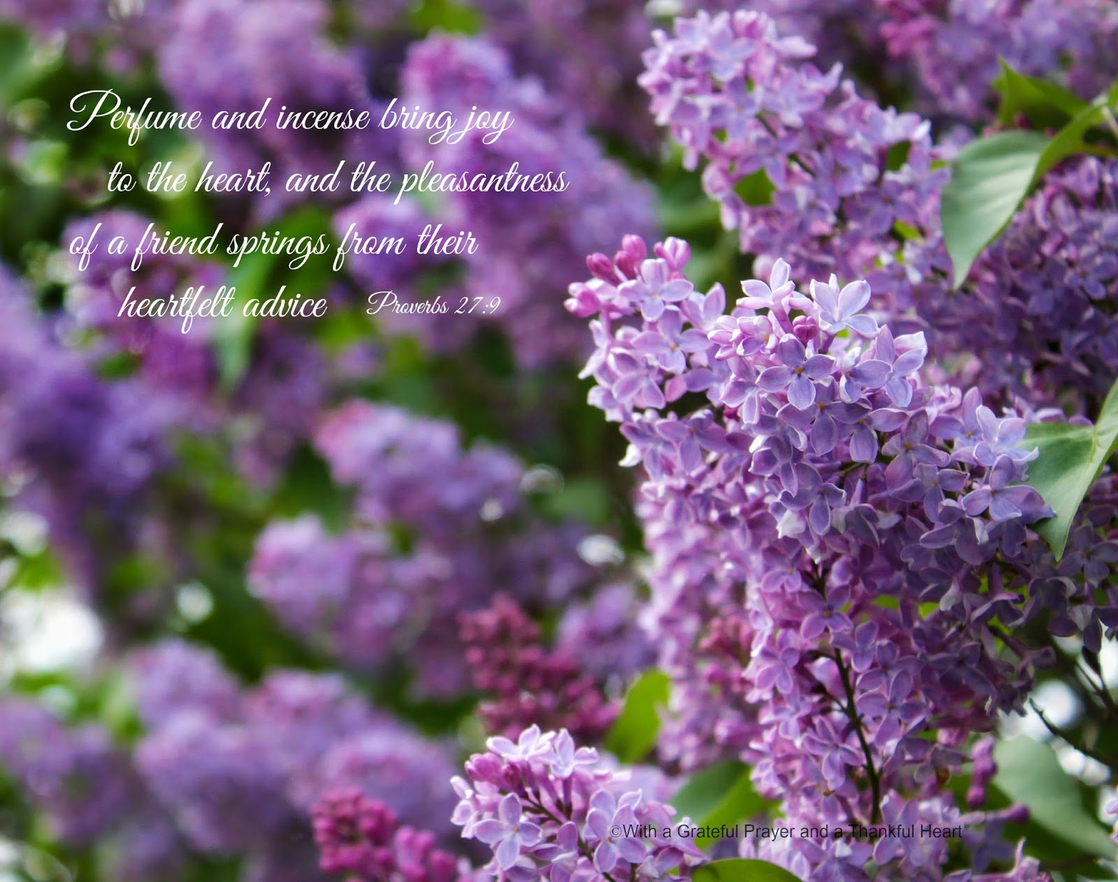 Lilacs Bush With A Grateful Prayer And A Thankful Heart Lilacs