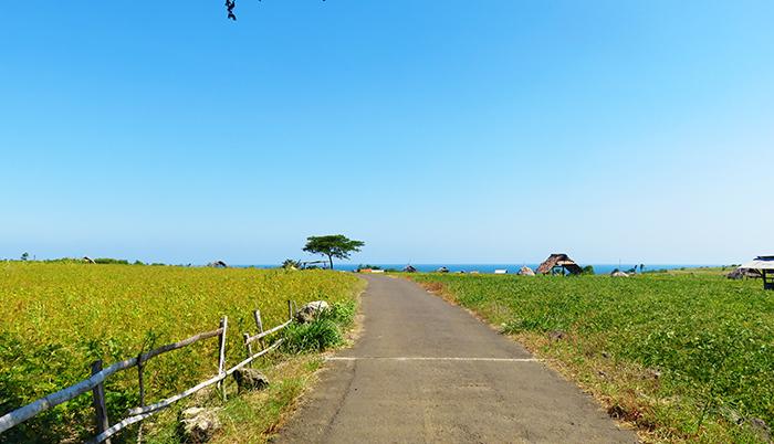 Perkebunan Kedelai Menjelang Pantai Buyutan