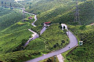 Tea garden in Mirik