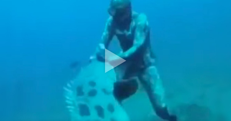 A Diver gets attacked by a giant Goliath Grouper