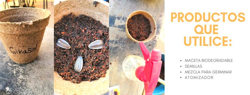 Experimento #3 Conociendo y germinando la semilla del GIRASOL GIGANTE