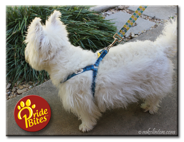 Pierre Westie modeling his PrideBites Step In harness