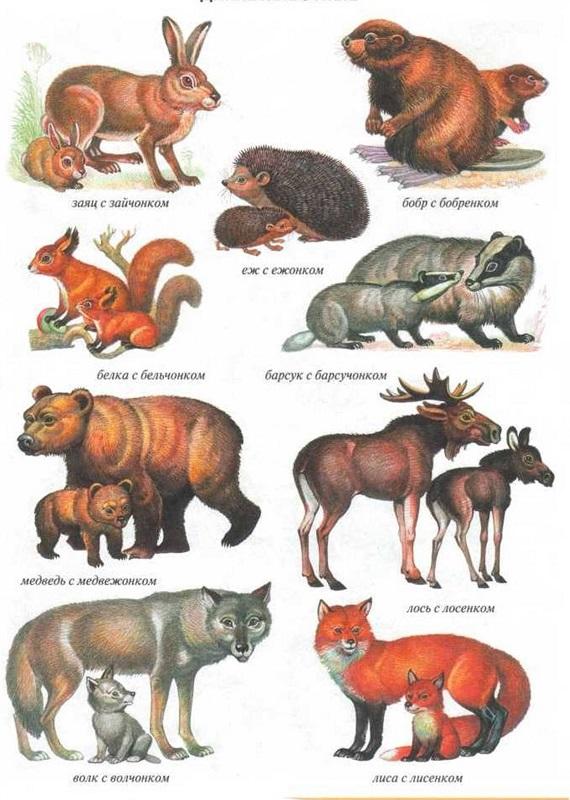 Дикие животные и их детеныши картинки для детей дидактический материал