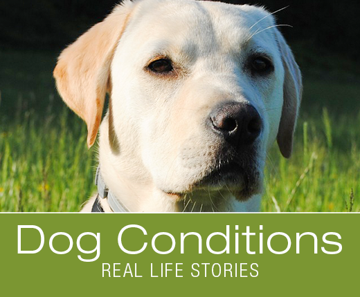 Dog Conditions - Real-Life Stories: Xylitol Toxicity Awareness: Lucy's Last Cake