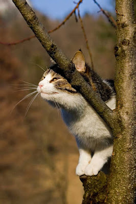 A cat rubbing its scent on a tree and depositing pheromones