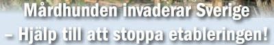 https://jagareforbundet.se/globalassets/documents/mardhundprojekt/mardhundsfolder_svensk.pdf