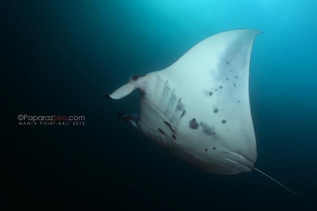 Jun lao, Underwater Bali