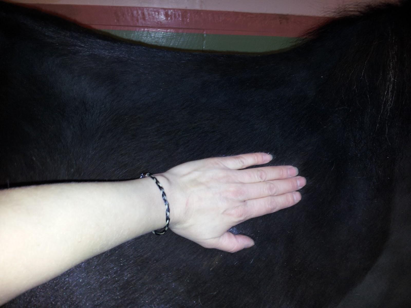 hur ser man om hästen är halt