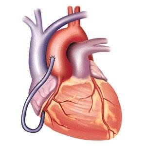 11.00 น. - 13.00 น. เวลาของหัวใจ @ Biological Clock นาฬิกาชีวิต