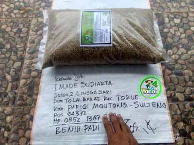 FOTO 3 : Benih Padi TRISAKTI   Pesanan I Made Sudiarta Sebelum di Packing